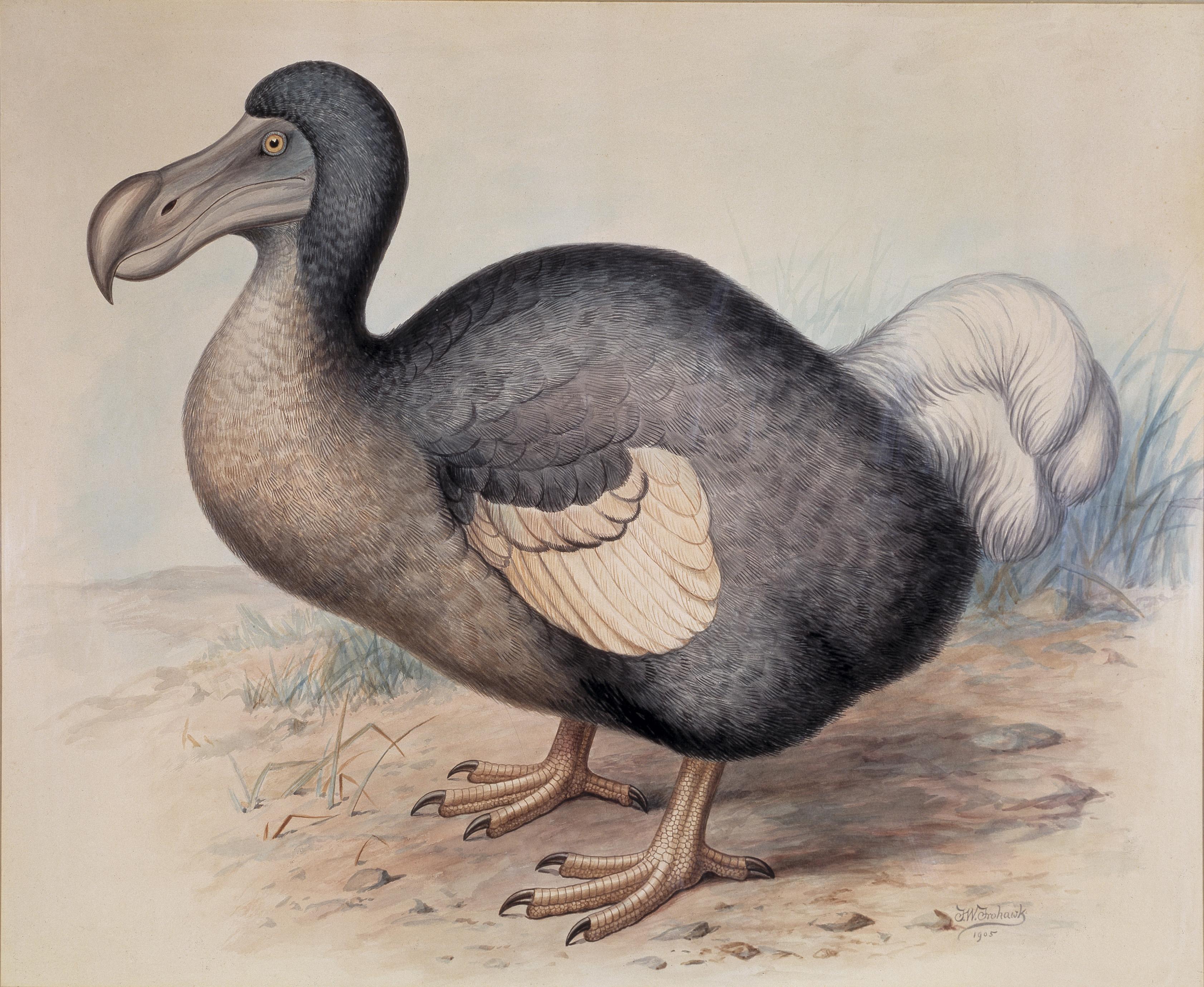 Extinct Birds Dodo Plate