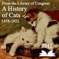 A History of Cats: 1858-1922