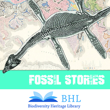 Fossil Stories