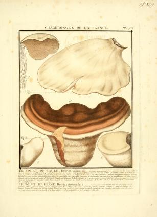 Herbier de la France, ou, Collection complette des plantes indigenes de ce royaume, avec leurs proprie´te´s, et leurs usages en medecine